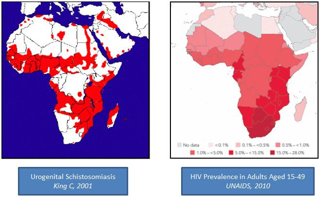 Mbabazi PS, Andan O, Fitzgerald DW, Chitsulo L, Engels D, et al. (2011) Examining the Relationship between Urogenital Schistosomiasis and HIV Infection. PLoS Negl Trop Dis 5(12): e1396. doi:10.1371/journal.pntd.0001396
