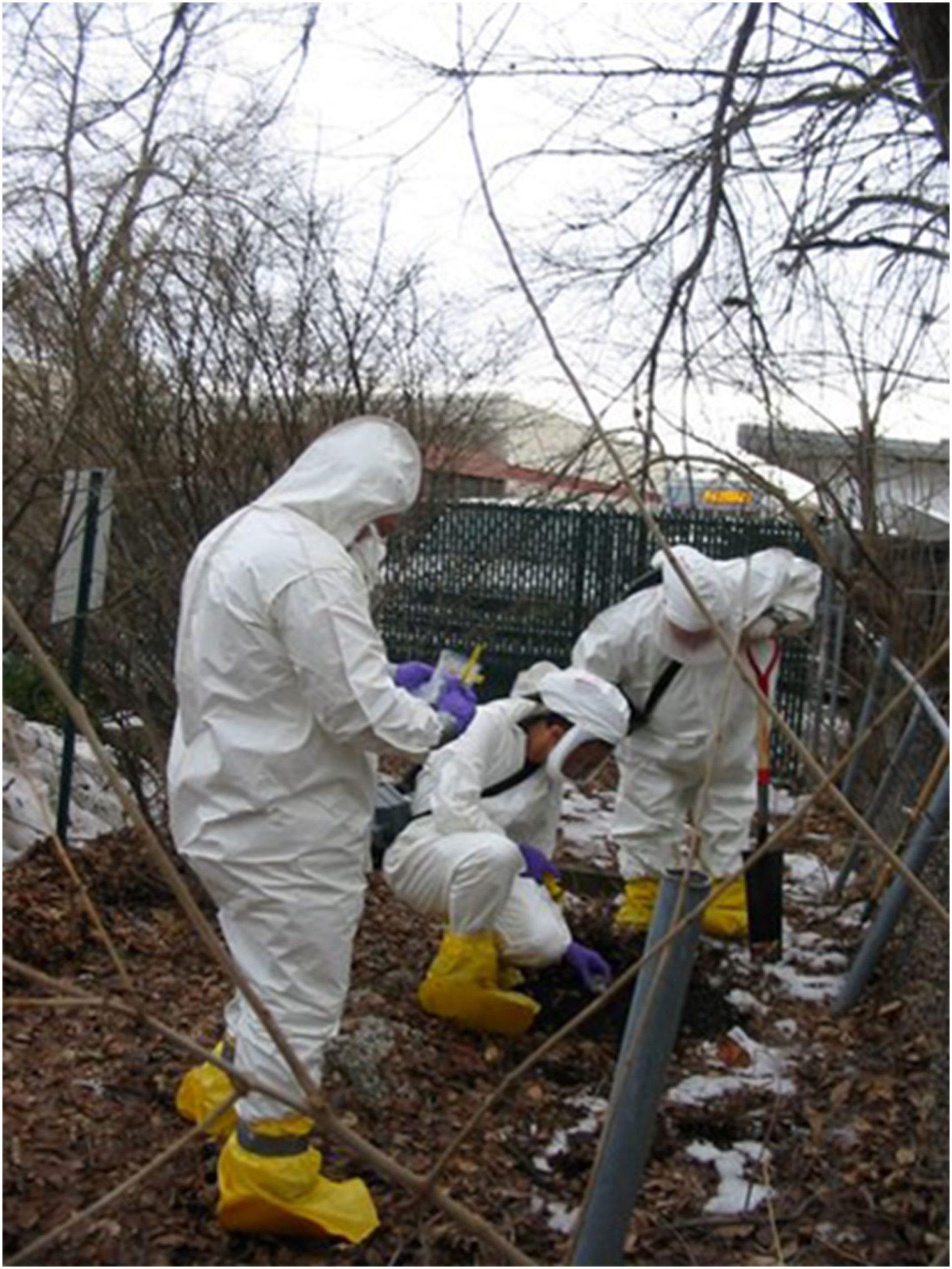 Litvintseva AP, Brandt ME, Mody RK, Lockhart SR (2015) Investigating Fungal Outbreaks in the 21st Century.